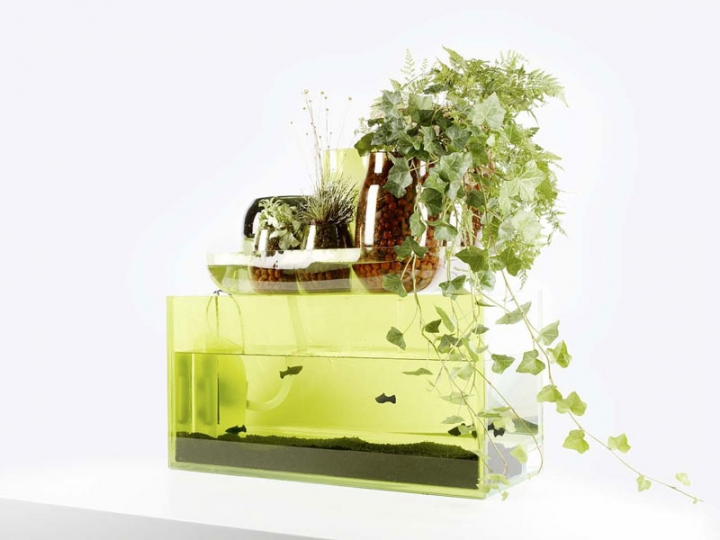 domestic-pond-liquid-garden-1