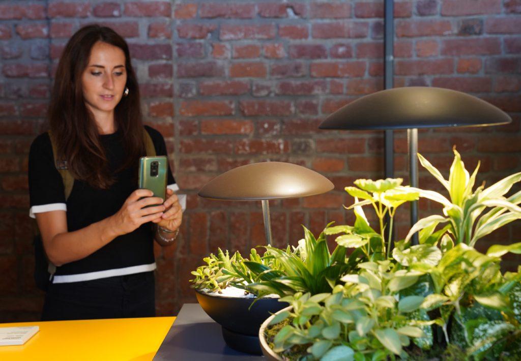 Garten: die Tischlampe mit Minigarten